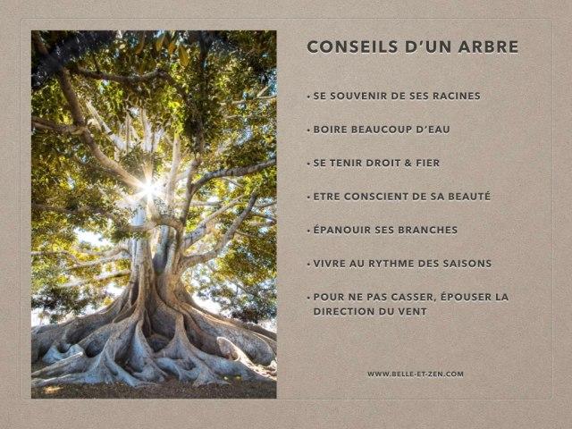 JPEGconseils d'un arbre.001