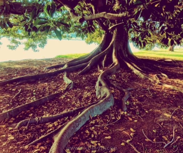 image arbre racine